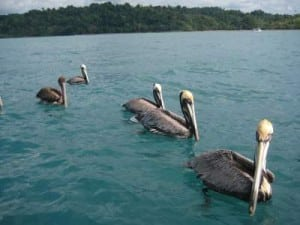 Organos Beach Paquera Costa Rica