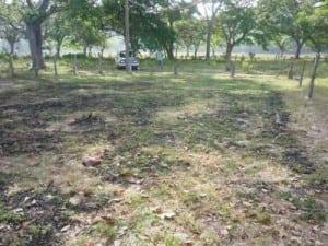 Property for Sale Rio Grande Paquera