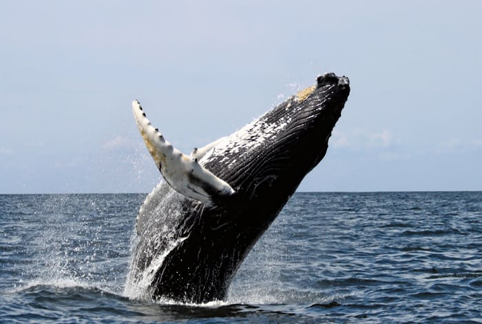 Best tours in the gulf of Nicoya Dolphin Watching